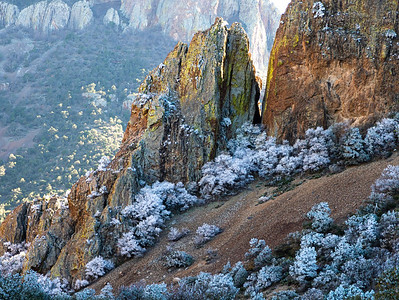 Frosty Morning in the Chisos