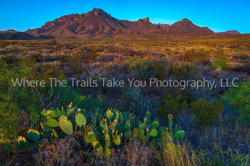 44.  Sunrise On The Desert