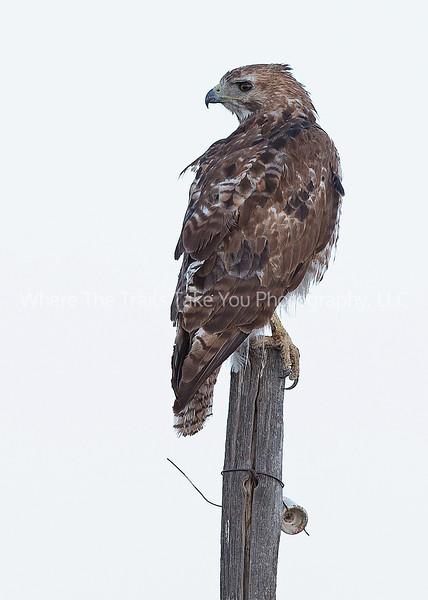 17.  Ruffled Feathers