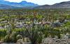 66.  Chihuahuan Desert Landscape