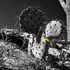 Prickly Pear Cactus & Wildflower