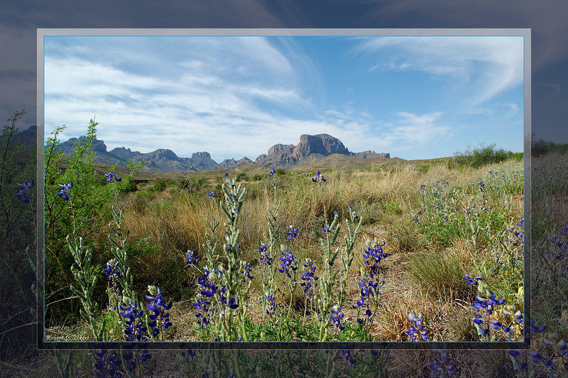 Big Bend Bluebonnets (16x24/8x12)