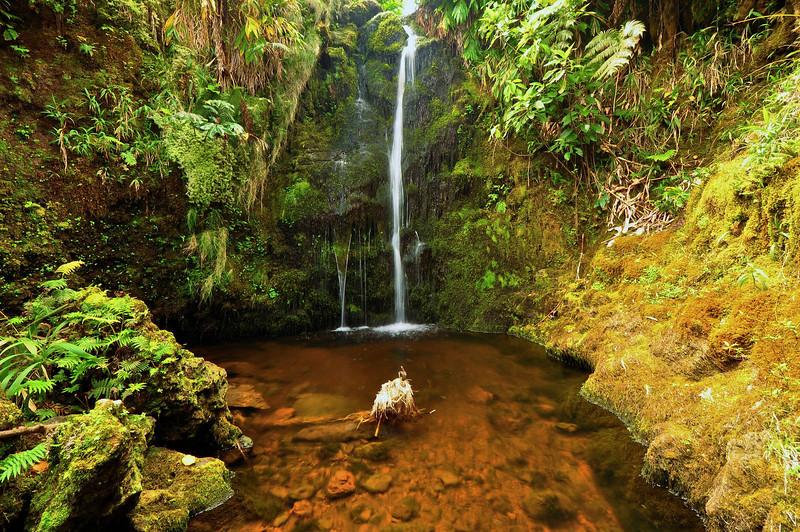 Stream grotto, Kohala Forest Preserve, North Kohala, Big Island, Hawaii