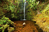 Stream grotto, Kohala Forest Preserve, North Kohala, Big Island, Hawaii