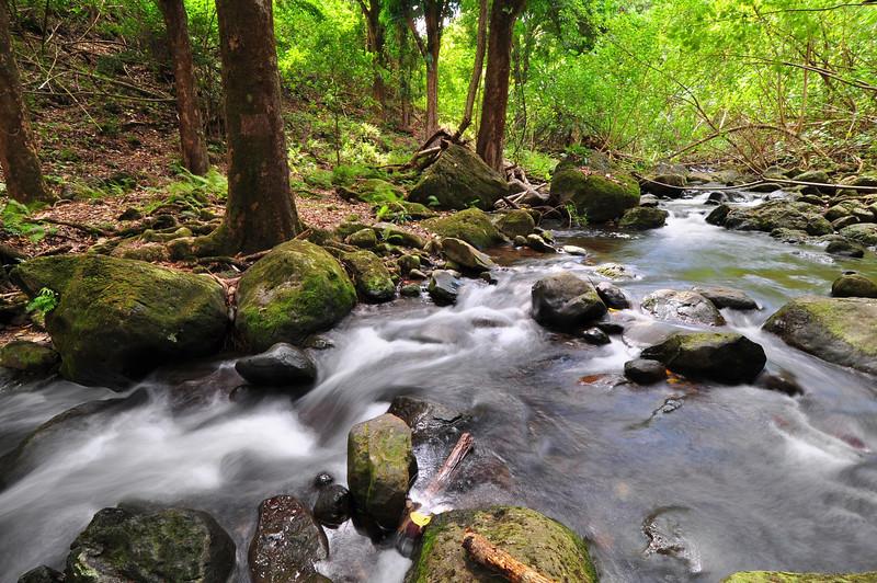 Wai'apuka Gulch Stream, North Kohala, Big Island, Hawaii