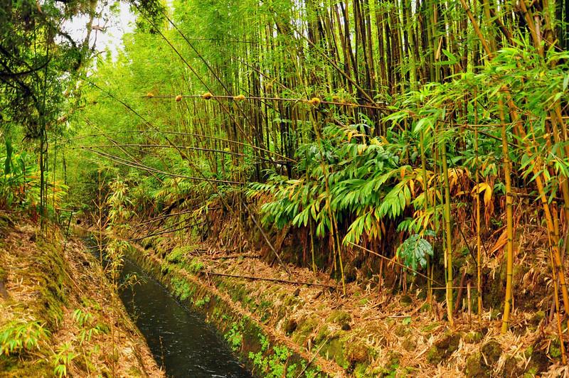North Kohala Forest Preserve