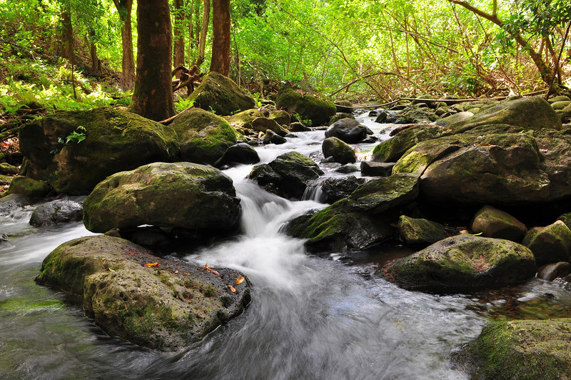 Wai'apuka Gulch Stream, North Kohala, Big Island, Hawaii