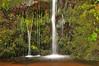 Kohala Forest Preserve