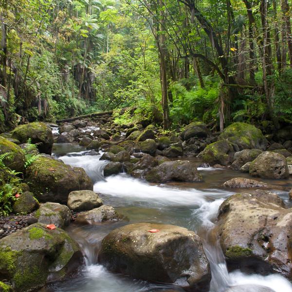 Nunue stream, North Hilo, Hawaii