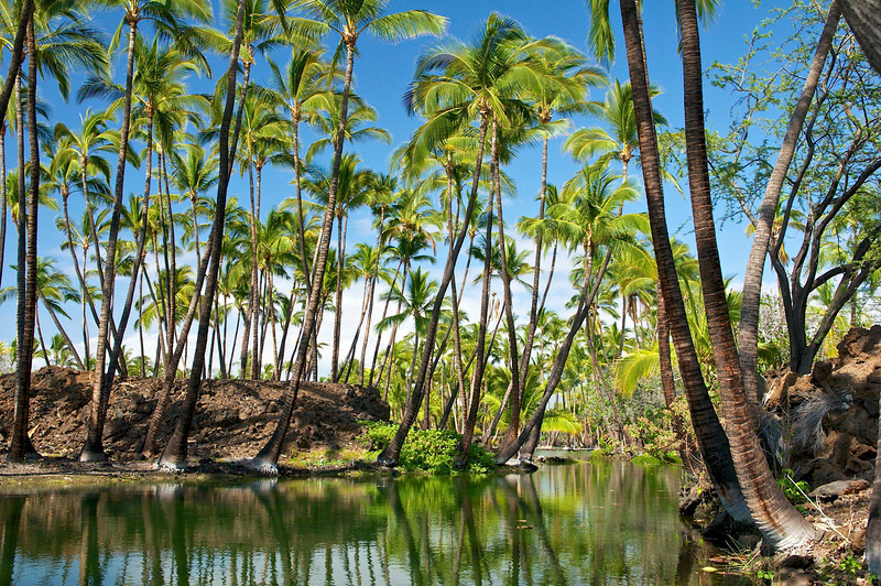 Fishpond, South Kohala, Big Island, Hawaii