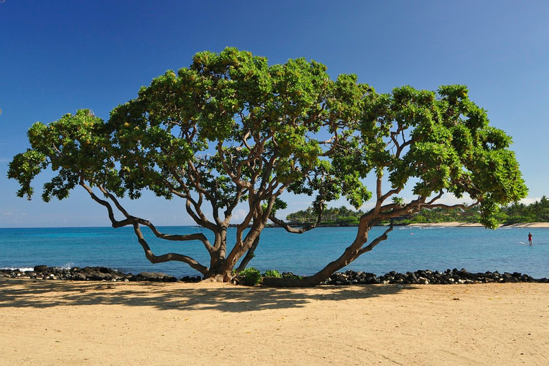 Kikaua Point Beach, North Kona, Big Island, Hawaii