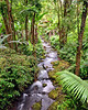 Ka'ie'ie Stream, South Hilo, Big Island, Hawaii