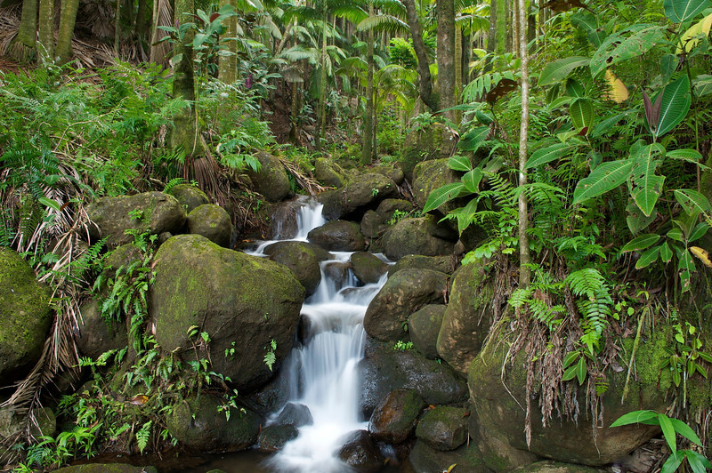 Alakahi Stream, South Hilo, Big Island, Hawaii