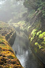 Hamakua Ditch, North Kohala Forest Preserve, Big Island, Hawaii