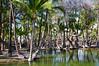 Fishpond, South Kohala, Big Island, Hawaii