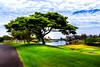 Big Island Trip 11.21 to 11.24