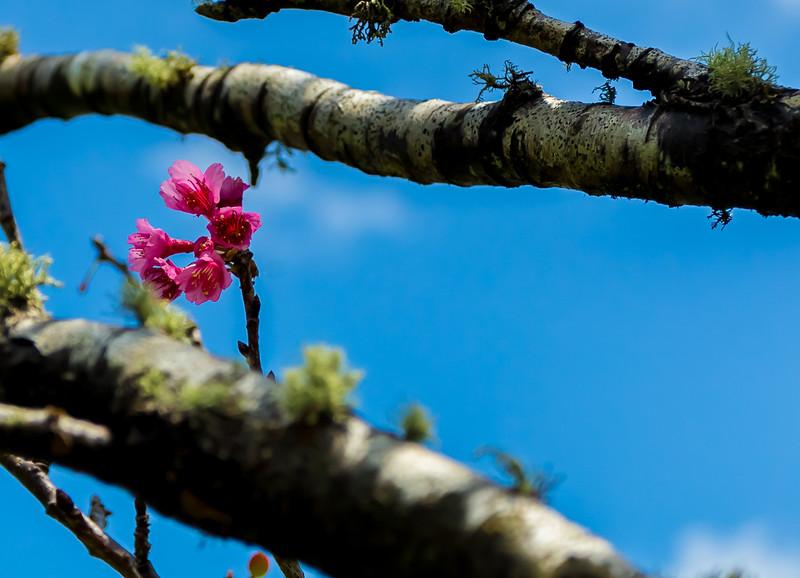 Mauna Kea / Waimea 4.11.14