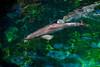 Dolphins / Waikoloa Big Island Hawaii