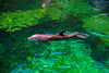 Dolphin / Waikoloa Big Island Hawaii