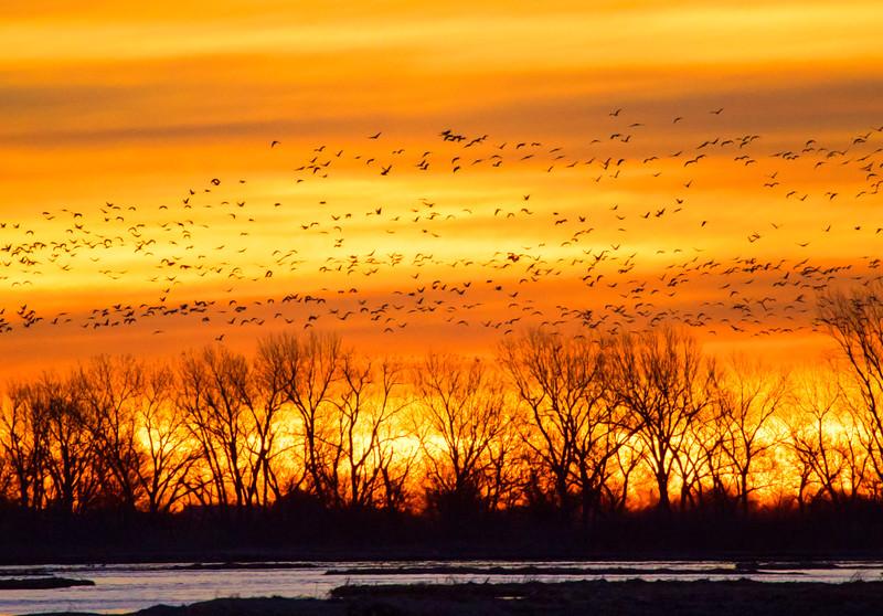 Big Nebraska Skies - 13
