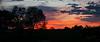 Shepherd Sunset