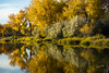 Fall Colors Along The Yellowstone River