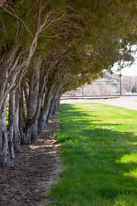 Formal Trees
