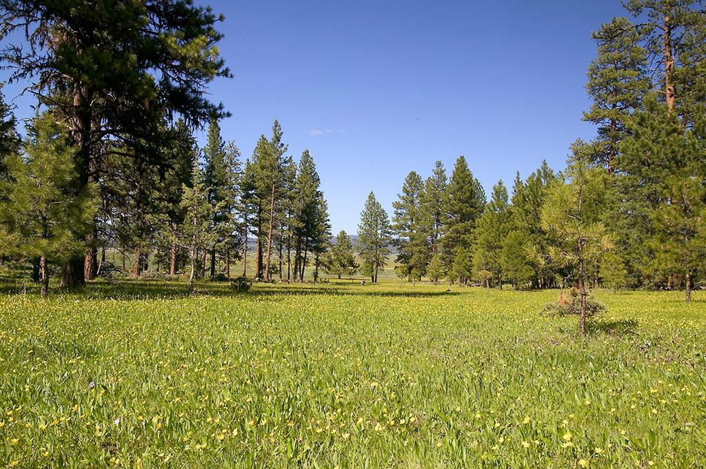 065_05 05 27_Big Summit Prairie  wildflowers
