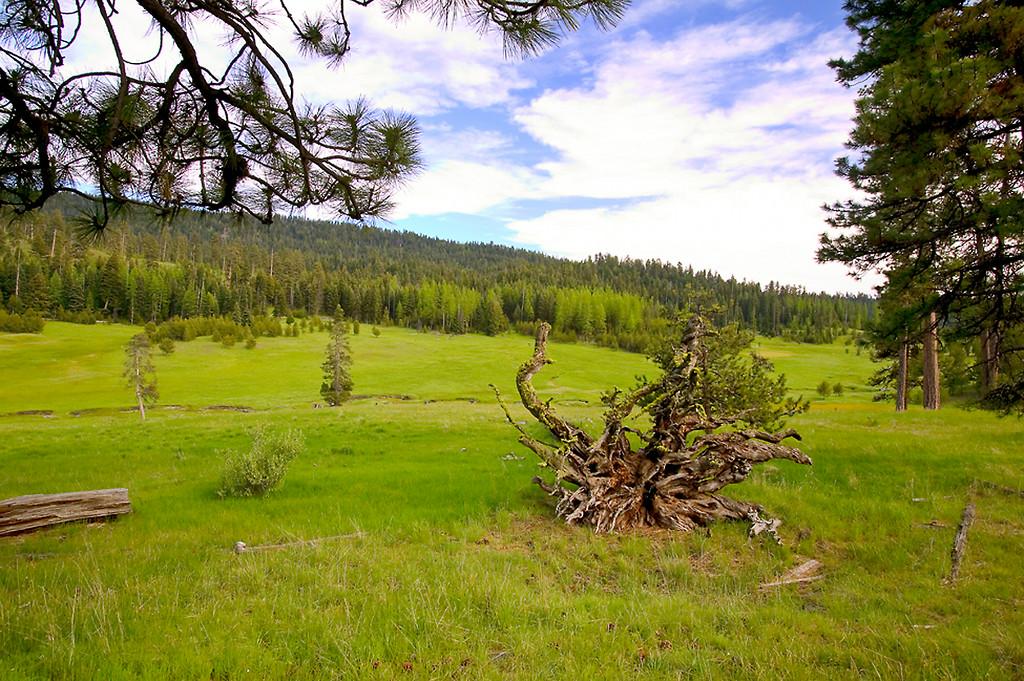 093_05 05 27_Big Summit Prairie  wildflowers