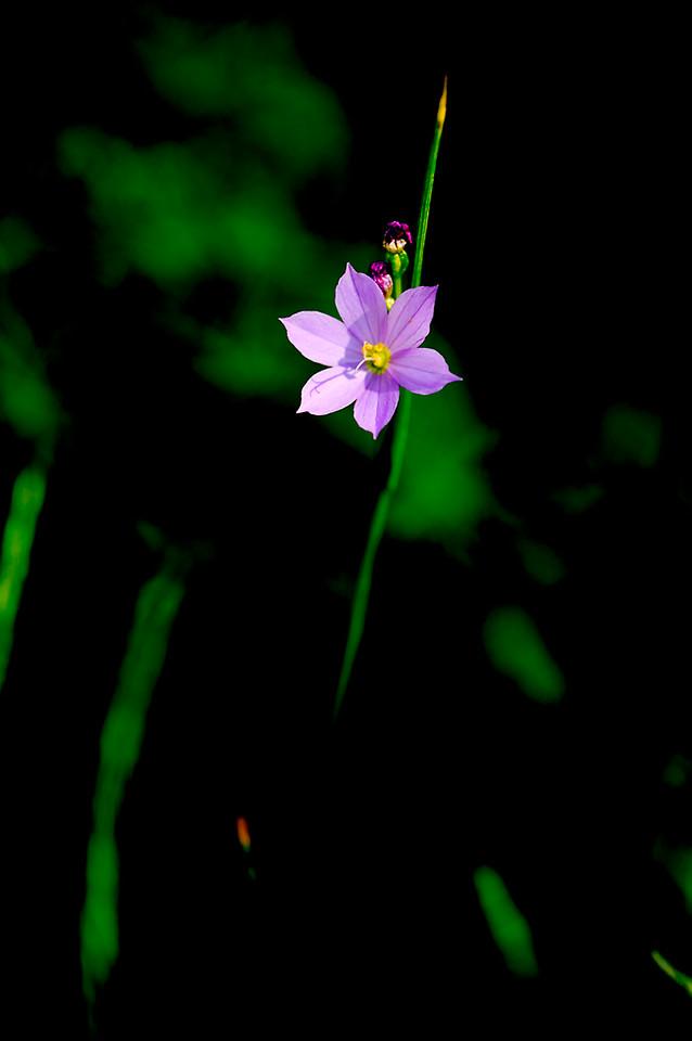 088_05 05 27_Big Summit Prairie  wildflowers