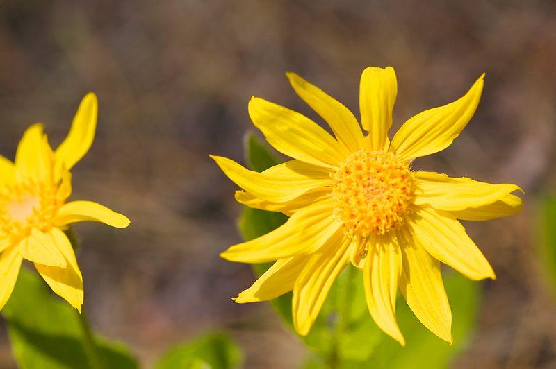 030_05 05 27_Big Summit Prairie  wildflowers
