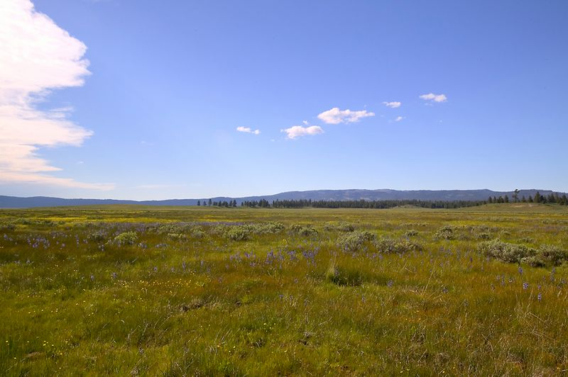 092_05 05 27_Big Summit Prairie  wildflowers