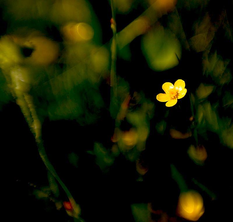 073_05 05 27_Big Summit Prairie  wildflowers