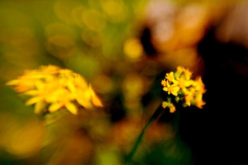 071_05 05 27_Big Summit Prairie  wildflowers