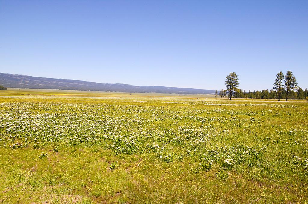 006_05 05 27_Big Summit Prairie  wildflowers
