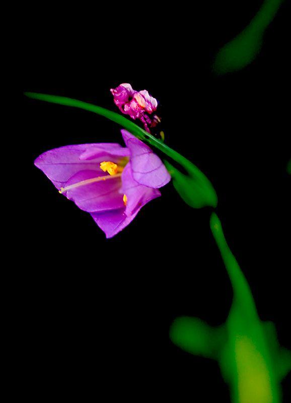 075_05 05 27_Big Summit Prairie  wildflowers 2
