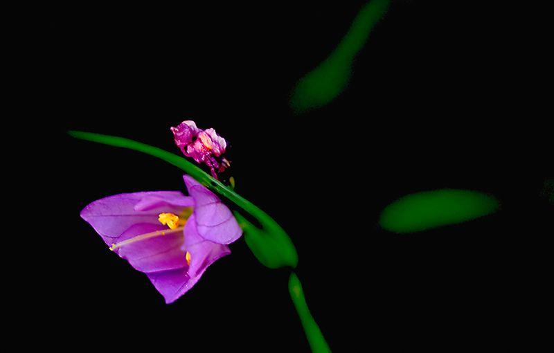 075_05 05 27_Big Summit Prairie  wildflowers