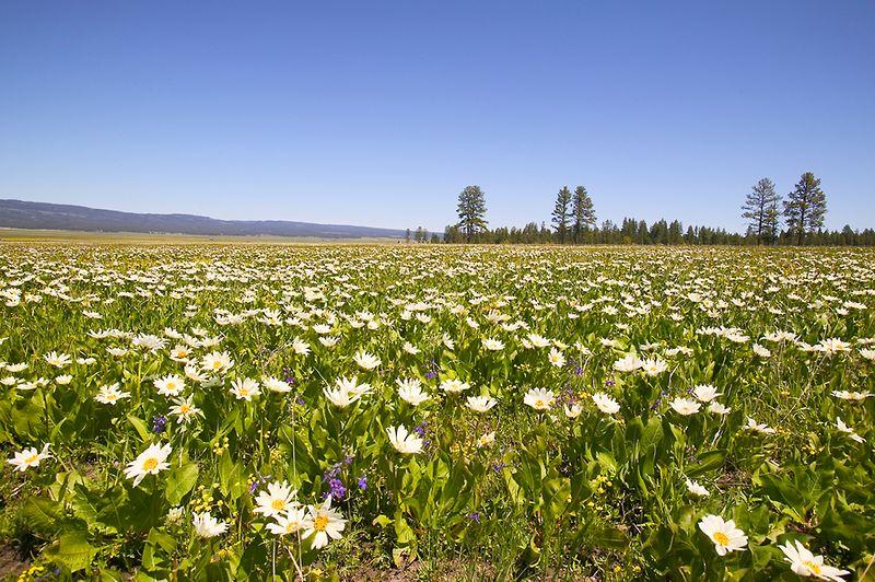 010_05 05 27_Big Summit Prairie  wildflowers