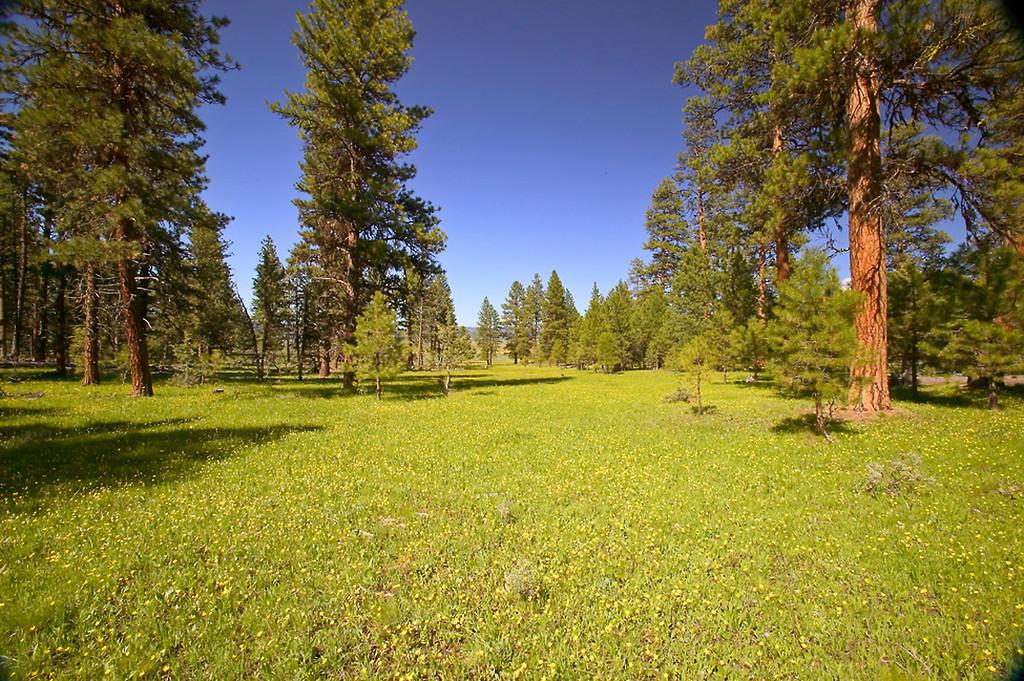 062_05 05 27_Big Summit Prairie  wildflowers