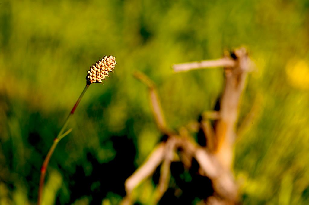 079_05 05 27_Big Summit Prairie  wildflowers