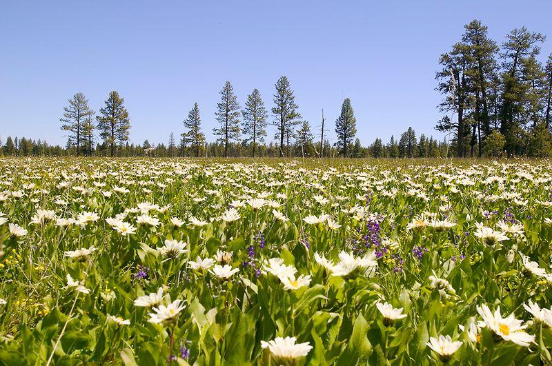 012_05 05 27_Big Summit Prairie  wildflowers
