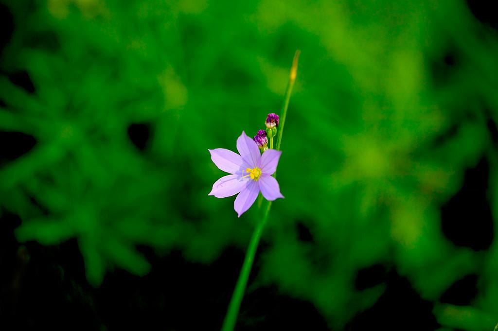 086_05 05 27_Big Summit Prairie  wildflowers