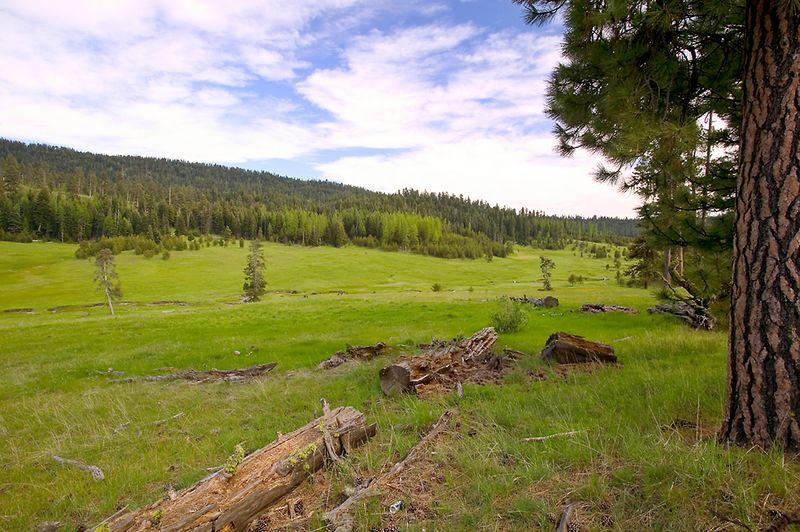 097_05 05 27_Big Summit Prairie  wildflowers