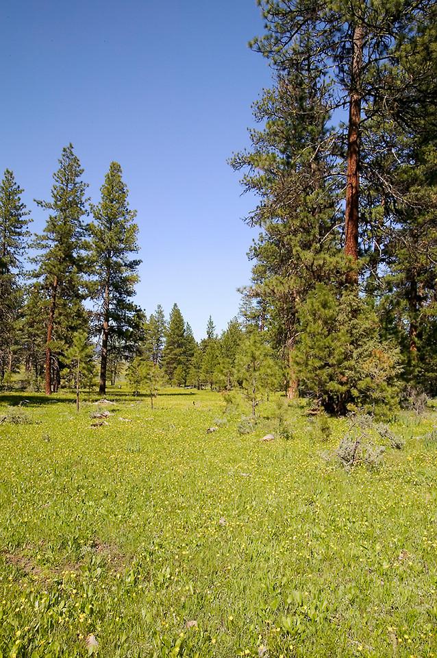 059_05 05 27_Big Summit Prairie  wildflowers