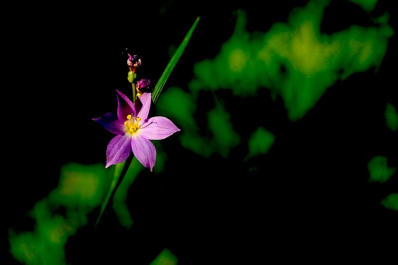 080_05 05 27_Big Summit Prairie  wildflowers
