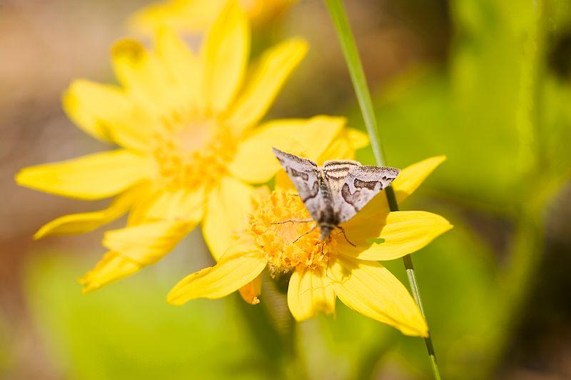 025_05 05 27_Big Summit Prairie  wildflowers