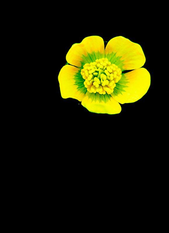 074_05 05 27_Big Summit Prairie  wildflowers 3