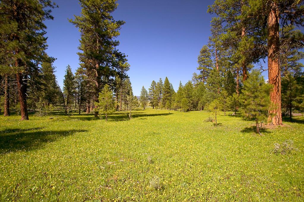 061_05 05 27_Big Summit Prairie  wildflowers