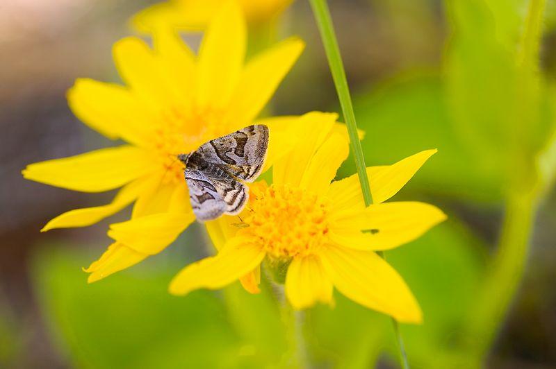 026_05 05 27_Big Summit Prairie  wildflowers