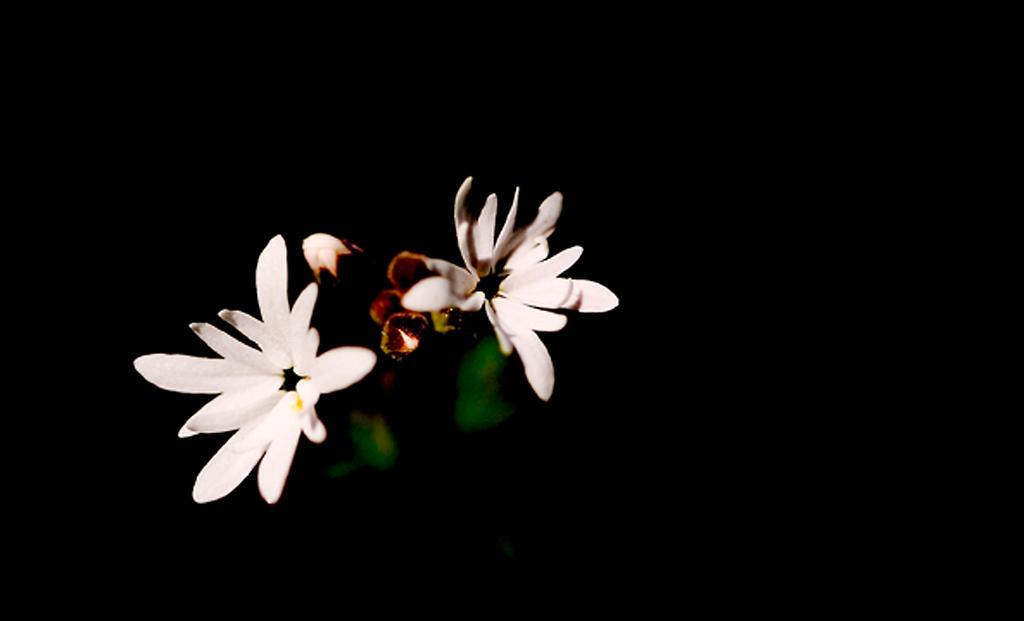 039_05 05 27_Big Summit Prairie  wildflowers